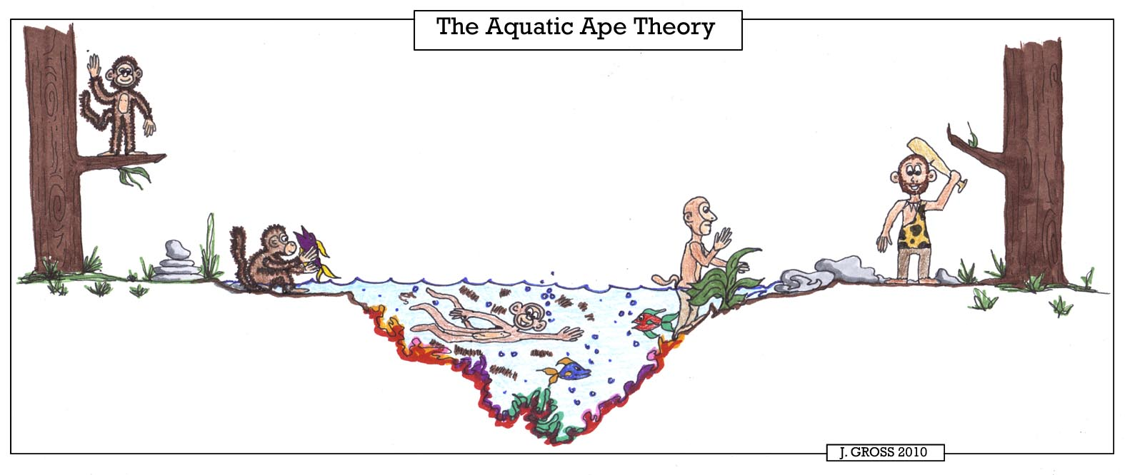 Aquatic-Ape-Theory