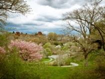 Arnold-Arboretum-5.Cierra-Design.400