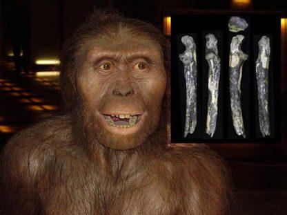 Australopithecus dişleri