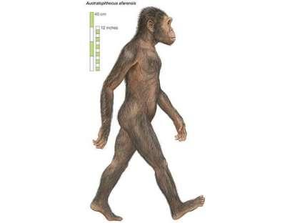 Australopithecus'un boyu 130 cm'i geçmezdi