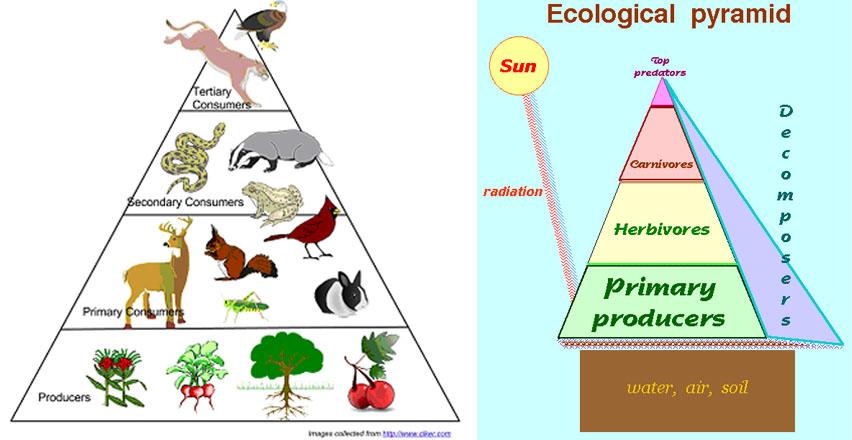 energy-pyramid