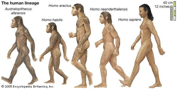 human evrimi