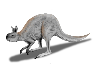 Procoptodon-685wjpg
